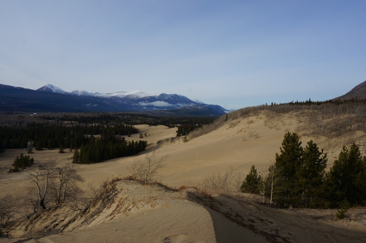 Carcross Desert in the middle of nowhere